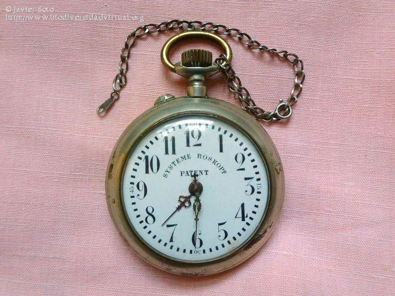 Reloj-de-bolsillo-Systeme-Roskopf-Patent-37458