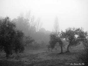 niebla ylluvia