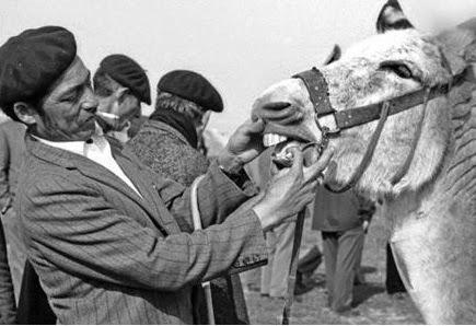 Gitanos comprando caballos web Campo de Criptana